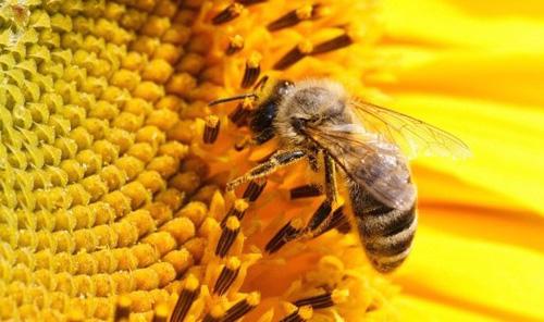 Oprema za pčelarstvo - Poljodom
